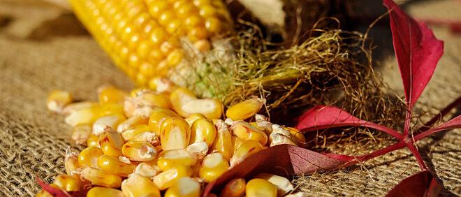 Agroserv Industrie SA