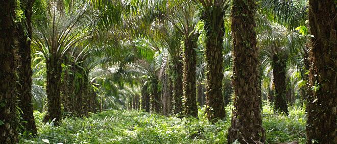Plantations et Huileries du Congo