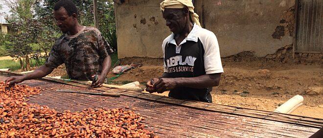Niche Cocoa Industry Ltd